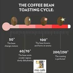 """La torrefazione:La torrefazione, cioè, la lenta tostatura dei chicchi del caffè, libera gli aromi e un sapore caratteristico. Ciò dipende da una reazione chimica chiamata """"reazione di Maillard"""", quando vengono riscaldati assieme proteine e zuccheri. Questa reazione, rende i prodotti alimentari molto più stabili all'ossidazione."""