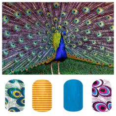 Designs shown here: Peacock / Citrus Skinny / Paradise Blue / Pink & Purple Peacock.  You can order them online at my Jamberry Nail page:  http://tealewilly.jamberrynails.net