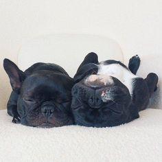 Quickie crash nap…