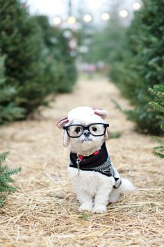 Coco Bean at the Tree Farm | © Chic Sprinkles  #dog #christmas #cards