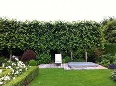1000 ideas about haie persistant on pinterest hedges for Arbre persistant pour petit jardin