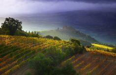 Фотография Montalcino fields автор Vadim Balakin на 500px