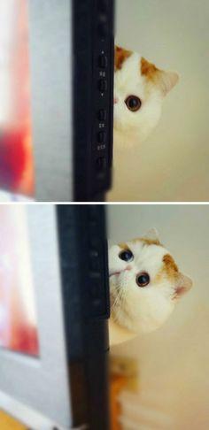 Hiding, just kidding...