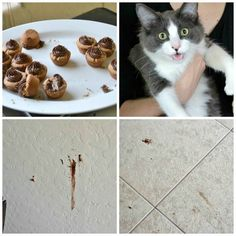 Reeses-Cat-Collage