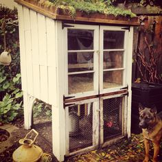 Chicken coop, ShabbyChic, green roof, love my Hens! Chicken Garden, Diy Chicken Coop, Chicken Nesting Boxes, Homestead Farm, Doodle Doo, Chicken Lady, Sustainable Practices, Chickens And Roosters, Down On The Farm