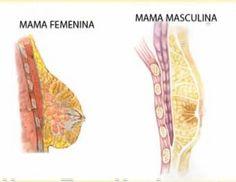 Cáncer de seno en los hombres