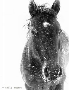"""custom order for craigrom - 50""""x34"""" enlargement, winter horse photograph on Etsy, Sold"""