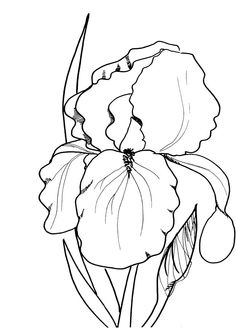 Spring Flowers Coloring Pages Print