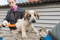 Russian man sells his apartments to build the animal shelter  #dogs #cats