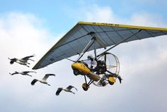 Whooping cranes fly with ultralight aircraft