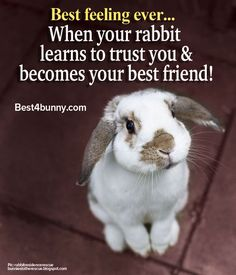 When you are searching for a pet that is not just cute, but very easy to keep, then look no further than a family pet bunny. Cute Baby Bunnies, Funny Bunnies, Cute Baby Animals, Animals And Pets, Pet Bunny Rabbits, Pet Rabbit, Bunny Bunny, Lop Bunnies, Bunny Hutch