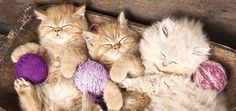 Calm kittens, is there anything sweeter?