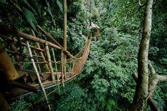 Puente colgante en un hotel casa de árbol de India