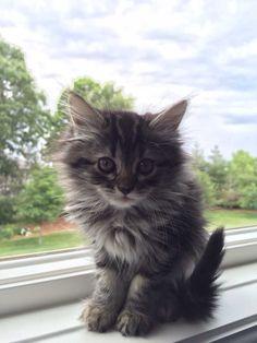 Sevimli kedi resmi 149 | kedi Latte +