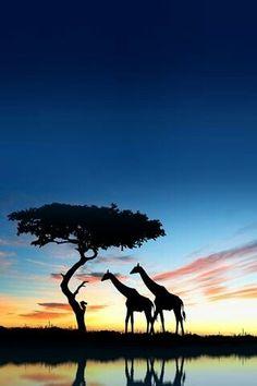 20. Nov: Heute ist Welttag der Industrialisierung Afrikas! www.kleiner-kalender.de/13785 #Afrika