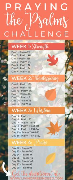 to deepen your prayer life? Study the Psalms this season with this new devotional that highlights their nuggets of wisdom and encouragement. Grow in understanding on how to seek the Lord daily as you read the words of God's own prayer book. Prayer Scriptures, Bible Prayers, Psalm Of Thanksgiving, Praying The Psalms, Scripture Study, Scripture Reading, Scripture Canvas, Prayer Times, Christ
