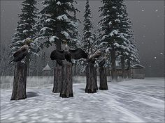 https://flic.kr/p/CSgPqk | BinemustSnow -  The Committee Is Deciding If Winter I Coming.... | Visit this location at Binemust in Second Life