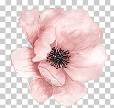 Flower Watercolor painting Clip art - Pink hand-painted flowers - Gardening for beginners and gardening ideas tips kids Watercolor Plants, Watercolor Leaves, Pink Watercolor, Watercolor Paintings, Watercolor Flower Background, Ink Painting, Flower Backgrounds, Flower Wallpaper, Wallpaper Plants