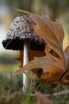 Mushroom in the Late Autumn
