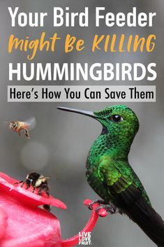 Is your feeder killing the hummingbirds you love watching throughout the day? Here are things you need to keep in mind when setting up your feeder. Hummingbird House, Hummingbird Nectar, Hummingbird Plants, Homemade Hummingbird Food, Humming Bird Feeders, Humming Birds, Humming Bird Bath, Food Feeder, How To Attract Hummingbirds