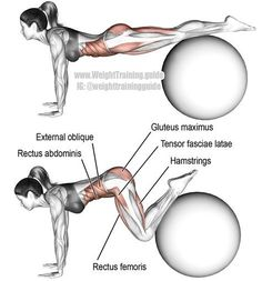 Stability ball jackknife Exercise details Target muscles: Iliopsoas Synergists: Tensor Fasciae Latae, Sartorius, Pectineus, Adductor L. Fitness Workouts, Sport Fitness, Health Fitness, Yoga Ball Workouts, Fitness Tracker, Corps Fitness, Bike Workouts, Swimming Workouts, Swimming Tips