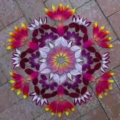 Flower mandalas                                                                                                                                                                                 More
