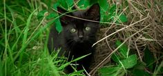 Sweet! Florida College to Give Feral Cats Their Own Dorms | Catster