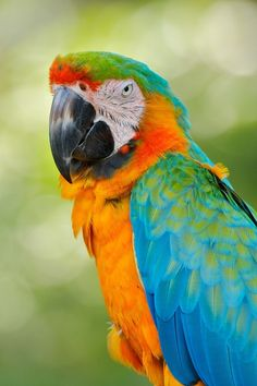 """earth-song:  """"Macaw"""" by matt pdx"""