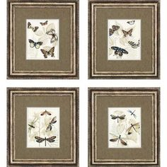 """Paragon Insects by Meagher Traditional Art (Set of 4) - 21"""" x 19"""" - 2059"""
