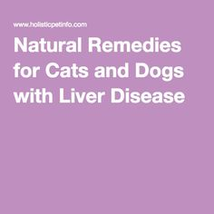 Natural Remedies for Cats and Dogs with Liver Disease