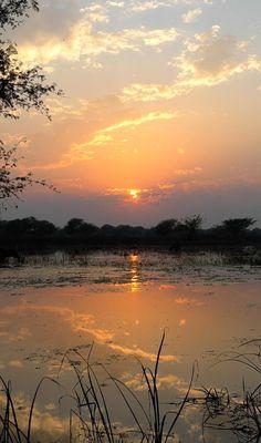 Sunset at Keoladeo Ghana National Park by Vinchel Budihardjo - Photo 72281763 - (India) First Instagram Post, Instagram Posts, Landscape Photography, Travel Photography, Tourist Center, India Asia, Bird Species, World Heritage Sites, Ghana