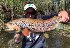 I've never seen a brown trout like this. River Tormes, Spain, here I come.....well one day at least.