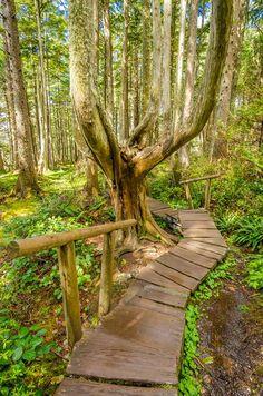 Northwestern hiking trail