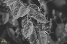 Black and White Details of a Leaf with by AshleyGreenPhoto on Etsy