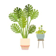 House plants - botanical, plants illustration by Laurence Lavallée aka Flo