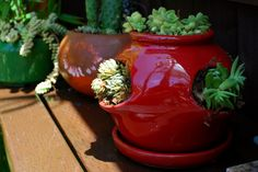 succulents planted in strawberry pot