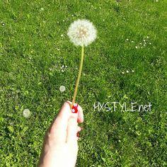 KESÄ....VOIKUKKA, Keltainen Iso nyt jo siemenvaiheessa. KOTI Puutarhojen Ilo ja riesa. Näitä oli IHANAA Lapsena puhallella...Muistatko? NÄHDÄÄN... HYMY #elämäntapa #luonto #kukat  #kukatpiristääaina #koti #puutarha #puisto #voikukka #ilo #riesa #hymy #kesä ❤☺