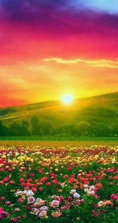 Beautiful Nature Pictures, Amazing Nature, Nature Photos, Beautiful Places, Nature Nature, Pretty Pictures, Nature Pictures Flowers, Beautiful Landscape Wallpaper, Beautiful Landscapes