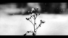 Chopin - Spring Waltz - YouTube
