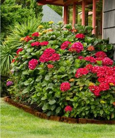 If your yard has only a little space to spare, consider trying the brilliantly colored, 3-foot-tall-and-wide mophead 'Glowing Embers' hydrangea.   Photo: Doreen Wynja   thisoldhouse.com