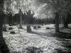 Haunted Bachelor's Grove Cemetery
