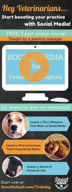 Veterinarian, vet tech, veterinary practice manager looking for great social media tips? Try this free, on-demand online course from Snout School. SnoutSchool.com/Training