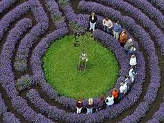 lavender-labyrinth in Germany, Kastellaun