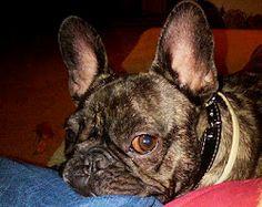 My Henry (AKA Studio Dog)