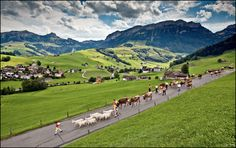 "500px / Photo ""Walk to the Farm II"" by Jan Geerk (Appenzell, Switzerland)"