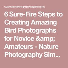 6 Sure-Fire Steps to Creating Amazing Bird Photographs for Novice & Amateurs - Nature Photography Simplified