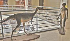 ¿Utilizaban los dinosaurios relojes de pulsera? | Dino Science