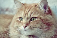 """cat portrait"" by David Charouz  Looks like our Mac"