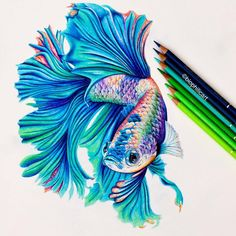 pencil drawings Picture of a Betta Fish drawn using colored pencils. Coloured pencil drawing of a Betta Fish using fantasy colors l used Faber Castell Polychromos and Caran Dache Lumin Pencil Drawings Of Animals, Fish Drawings, Realistic Drawings, Art Drawings Sketches, Colorful Drawings, Art Sketches, Beta Fish Drawing, Horse Drawings, Drawing Animals