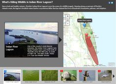 What's Killing Wildlife in Indian River Lagoon? Once a lush and healthy estuary, Florida's Indian River Lagoon is now the scene of a wildlife tragedy.